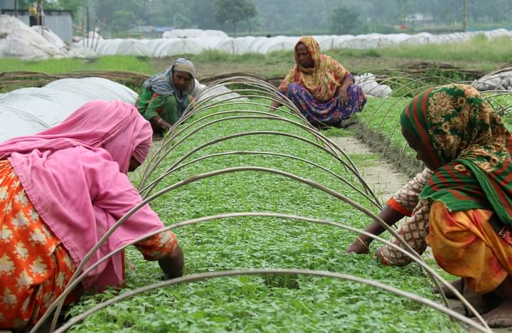 নরসিংদীতে সবজির চারায় ভাগ্য বদল নরসিংদীর কৃষকদের